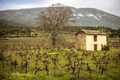 campagne - 11 avril 2017 - Vaucluse - Provence - France